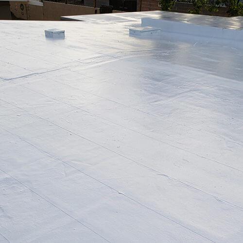 flat coat roof 2